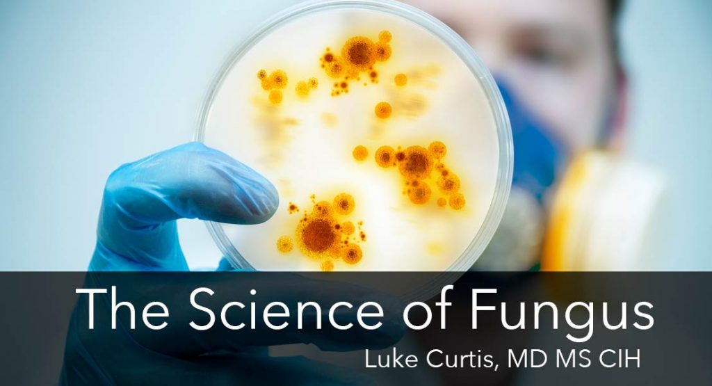 science-of-fungus-554px