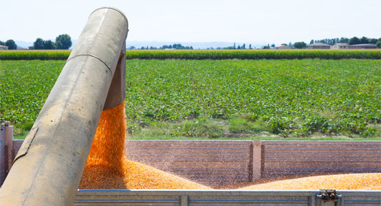 industrial-farming-avoiding-corn