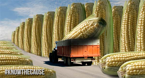 gmo-corn-truck