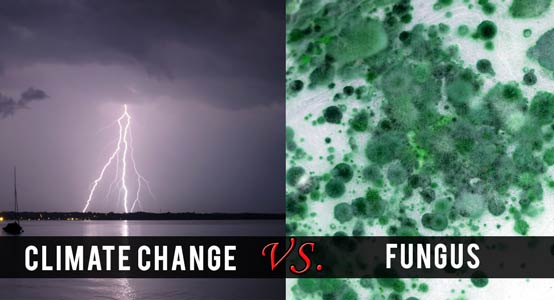 climate-change-fungus-554px