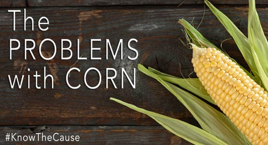 problem-with-corn-554px