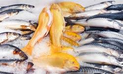 FISH-2-250px