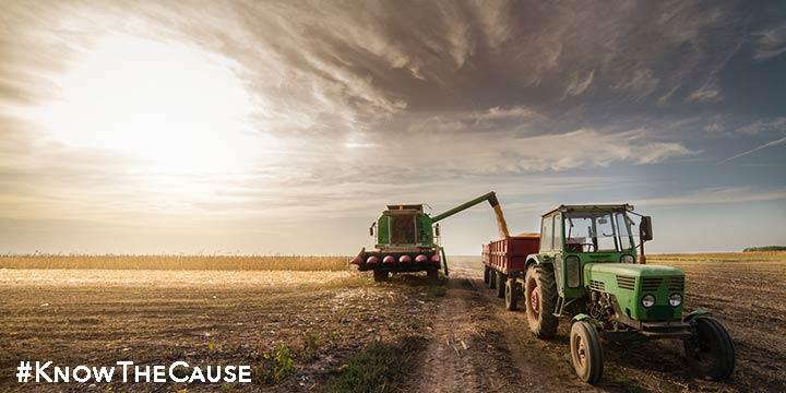 hybrid-vs-GMO