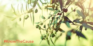 Olive Leaf Benefits