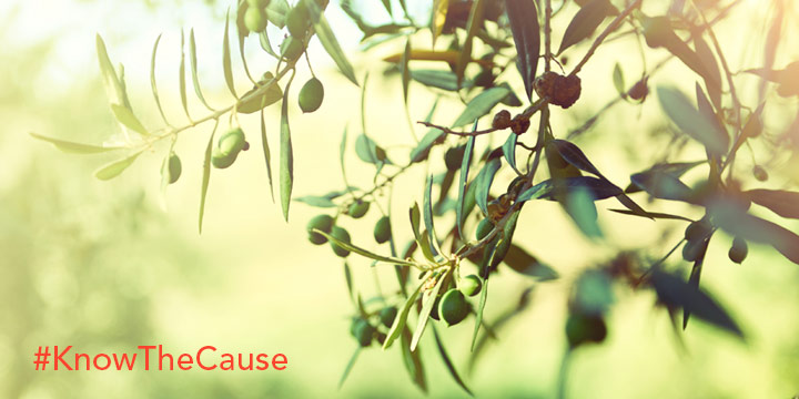 Olive Leaf Benefits