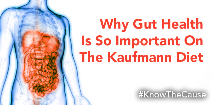 Why Gut Health is so important on the Kaufmann Diet